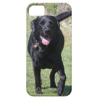 Foto hermosa del perro negro del labrador retrieve iPhone 5 carcasa