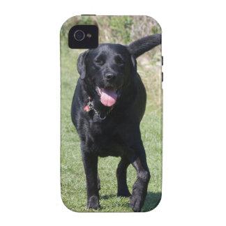Foto hermosa del perro negro del labrador retrieve iPhone 4 carcasa