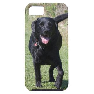 Foto hermosa del perro negro del labrador retrieve iPhone 5 Case-Mate fundas