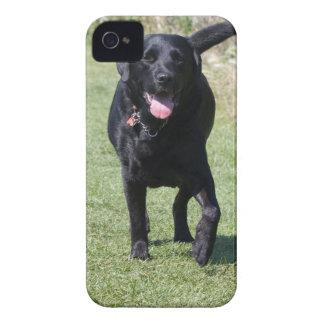 Foto hermosa del perro negro del labrador retrieve Case-Mate iPhone 4 carcasa