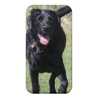 Foto hermosa del perro negro del labrador retrieve iPhone 4 carcasas