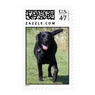 Foto hermosa del perro negro del labrador sello postal