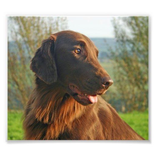Foto hermosa del perro revestido plano del perro p
