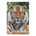 Foto hermosa del primer del retrato del tigre, reg iPad mini coberturas