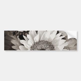 Foto hermosa del ramo del girasol en negro y blanc pegatina para auto