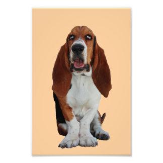 Foto hermosa del retrato del perro de Basset Hound