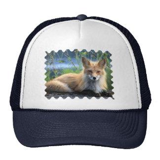 Foto hermosa del retrato del zorro rojo, regalo gorras de camionero