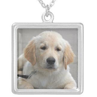 Foto hermosa linda de oro del perro de perrito de  collar plateado