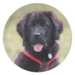 Foto hermosa linda del perrito del perro de Terran Plato De Cena