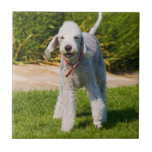 Foto hermosa linda del perro de Bedlington Terrier Teja Cerámica