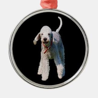 Foto hermosa linda del perro de Bedlington Terrier Adorno