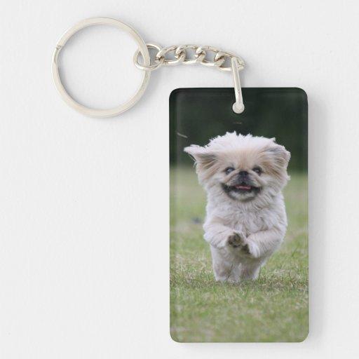 Foto hermosa linda del perro de Pekingese, regalo Llaveros