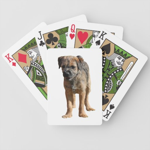 Foto hermosa linda del perro de perrito de Terrier Baraja De Cartas