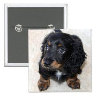 Foto hermosa linda del perro de perrito del Dachsh Pin