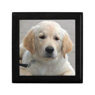 Foto hermosa linda del perro de perrito del golden cajas de recuerdo