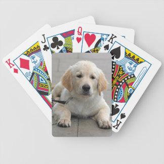 Foto hermosa linda del perro de perrito del golden cartas de juego