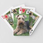 Foto hermosa linda del perro de Terrier galés, reg Baraja