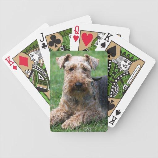 Foto hermosa linda del perro de Terrier galés, reg Cartas De Juego