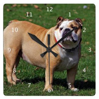 Foto hermosa linda del perro inglés del dogo reloj cuadrado