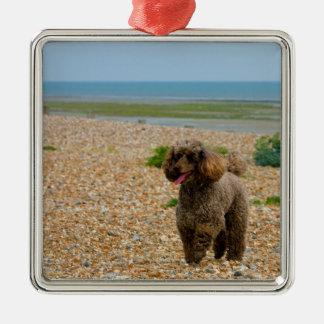 Foto hermosa miniatura del perro de caniche en la adorno navideño cuadrado de metal