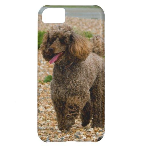 Foto hermosa miniatura del perro de caniche en la  funda para iPhone 5C