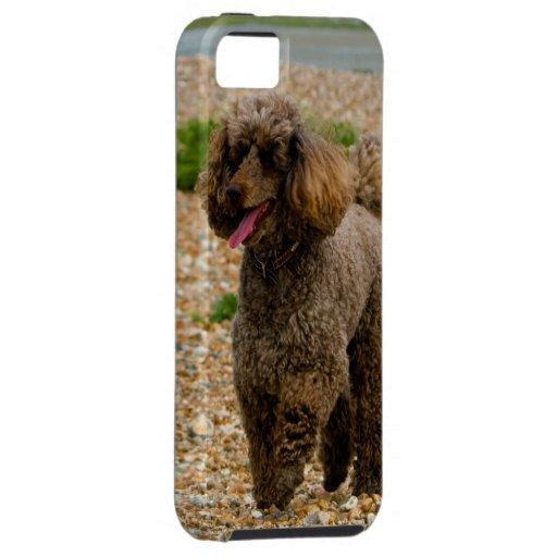 Foto hermosa miniatura del perro de caniche en la  iPhone 5 protector