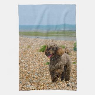 Foto hermosa miniatura del perro de caniche en la toalla