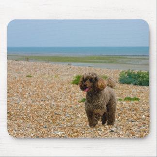 Foto hermosa miniatura del perro de caniche en la  tapete de ratones
