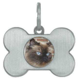 Foto Himalayan del gato con los ojos azules Placa Mascota