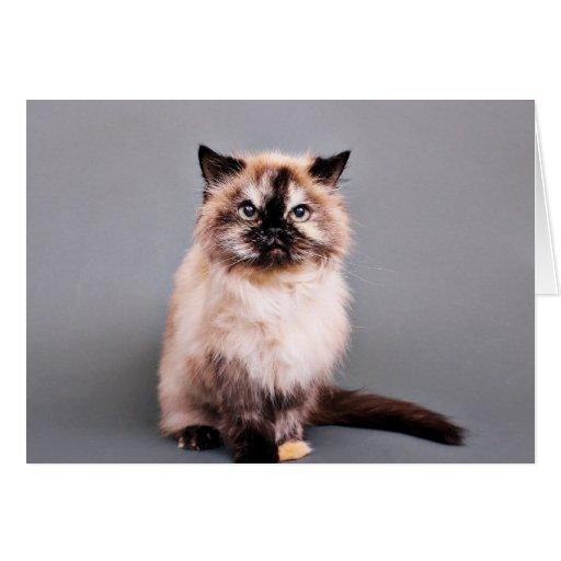 Foto Himalayan del retrato del gato de la tortuga Tarjeta Pequeña