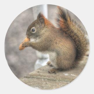 Foto joven de la fauna de la ardilla y del pegatina redonda