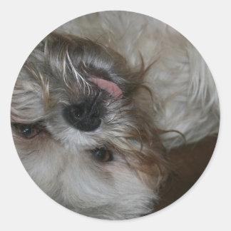 foto linda adorable del perro de perrito del tzu pegatina redonda