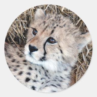 Foto linda de Cub del guepardo Etiqueta Redonda