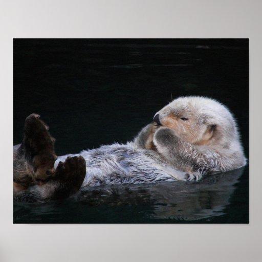 Foto linda de la nutria de mar póster