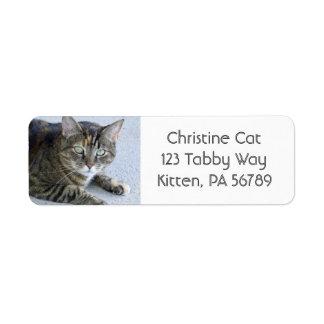 Foto linda del gato de Tabby Etiqueta De Remite