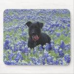 Foto linda del perro de perrito del campo de los B Tapete De Ratón