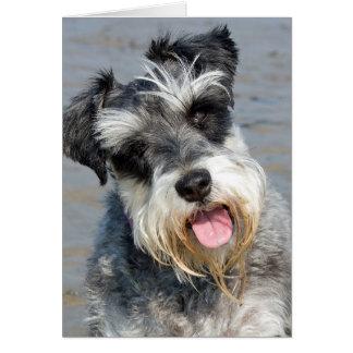 Foto linda del perro miniatura del Schnauzer en la Tarjeton