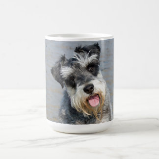 Foto linda del perro miniatura del Schnauzer en la Taza