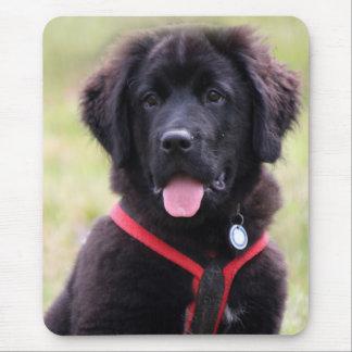Foto linda hermosa del perrito del perro de Terran Tapete De Raton