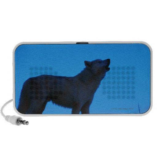 Foto, lobo blanco que grita en la noche, color, ar sistema de altavoz