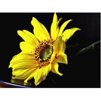 Foto macra amarilla de la flor esculturas fotográficas