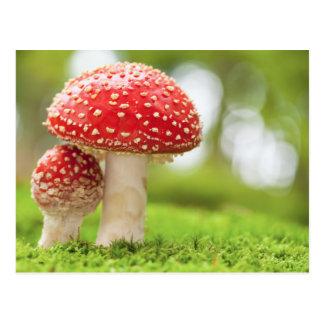 Foto macra de la amanita Muscaria en bosque