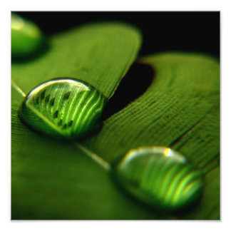 foto macra de la hoja verde mojada fotografías