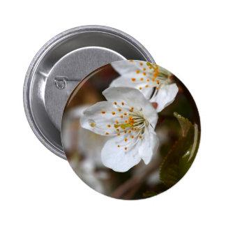 foto macra de las flores de la cereza pin redondo de 2 pulgadas