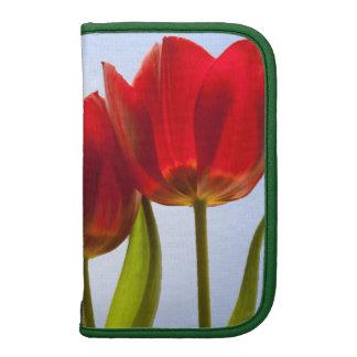 Foto macra de tres tulipanes rojos en una fila organizador