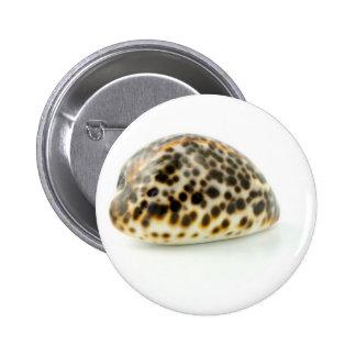 Foto macra de un Seashell 4 Pins