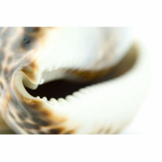 Foto macra de un Seashell Escultura Fotográfica