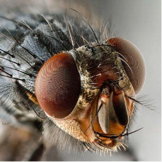 Foto macra de una mosca escultura fotográfica