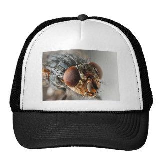 Foto macra de una mosca gorros