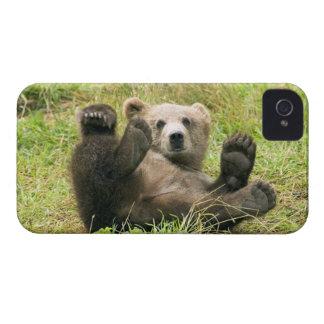 Foto marrón linda del cachorro de oso grizzly, iPhone 4 Case-Mate cobertura